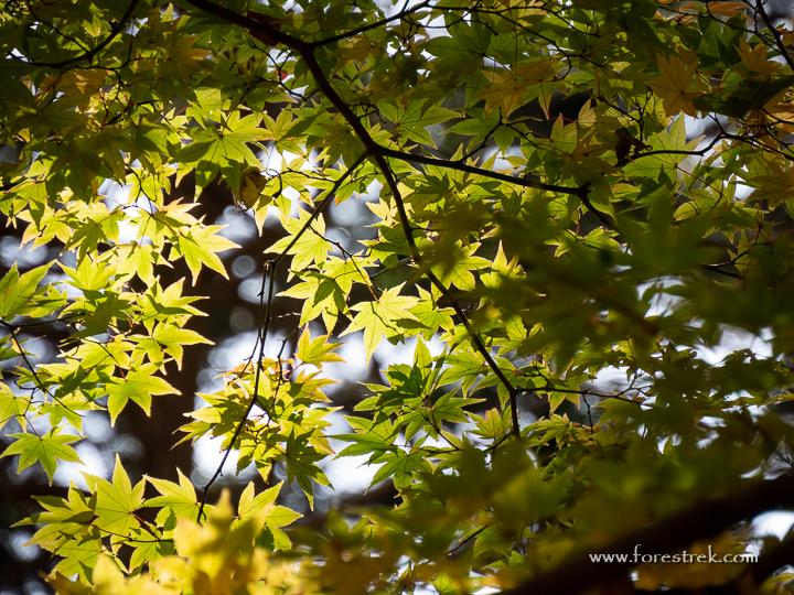 201107-11.32.41_0001.jpg