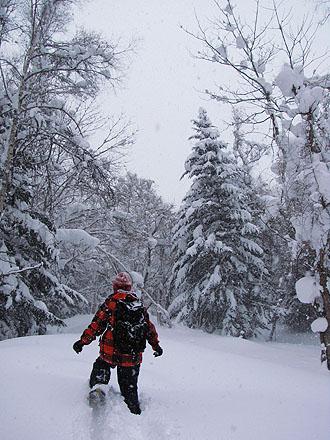snowshoe0.jpg